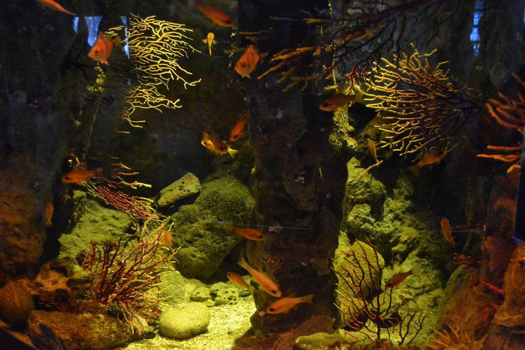 Все виды аквариумных рыб фото и описание порадовать
