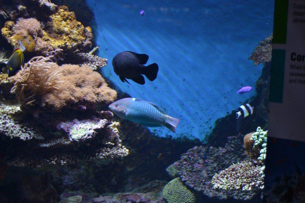 сыграл усталости фото аквариум бурчи араб самая