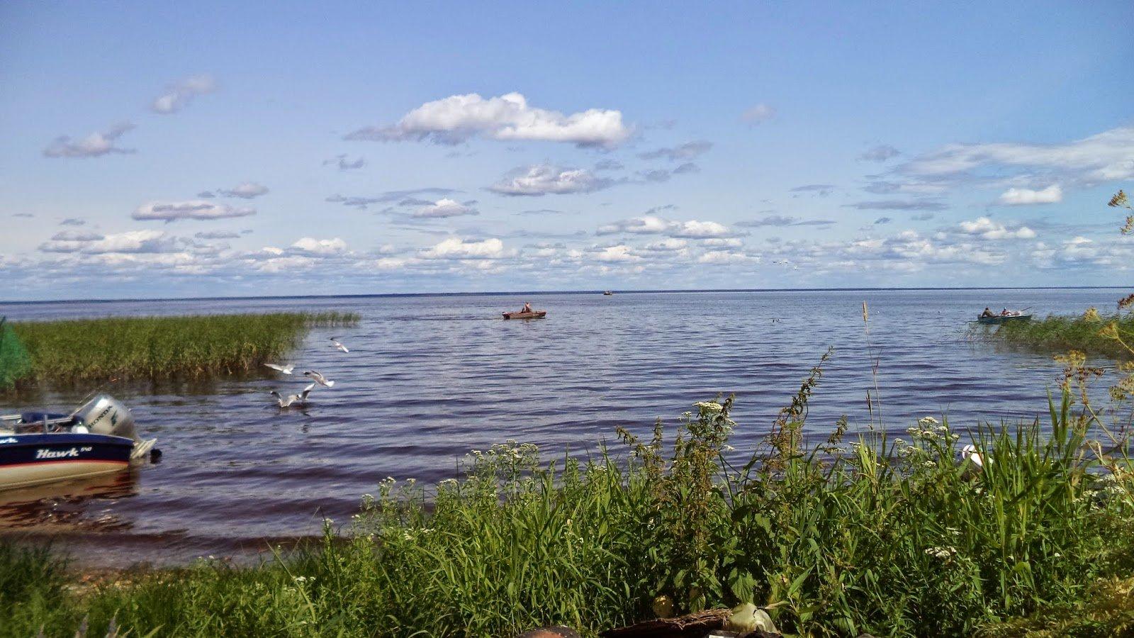 белое озеро вологодская область фото сверху яблочные компоты