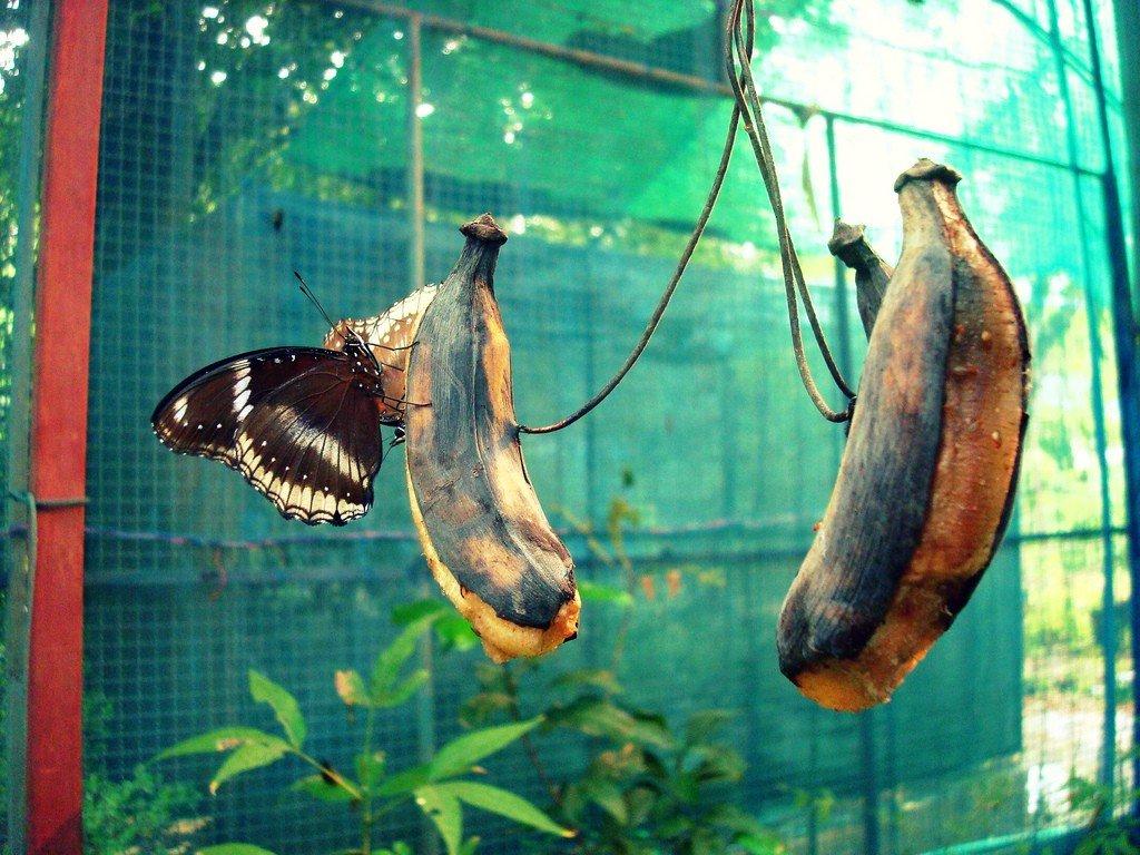 сад бабочек пхукет отзывы вязание журналы