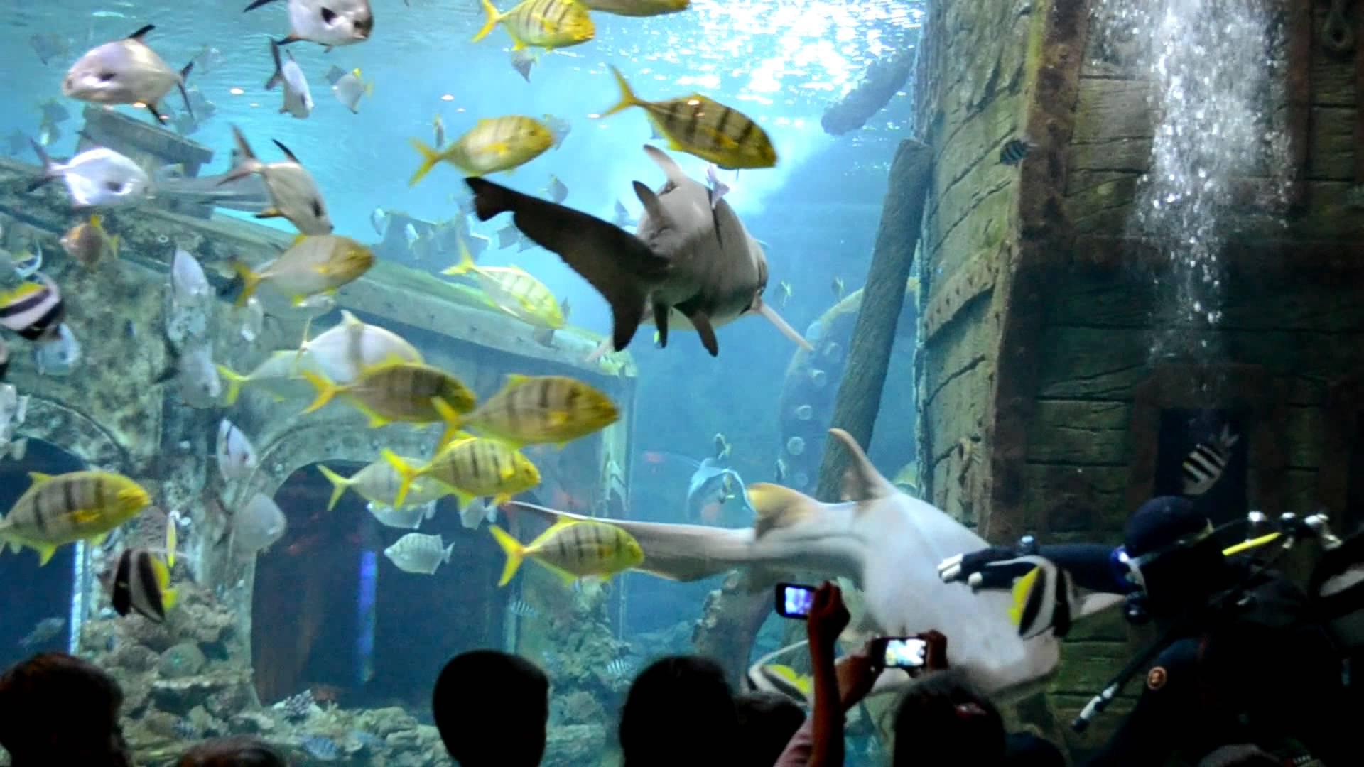 Воронежский океанариум в Воронеже — подробная информация с фото