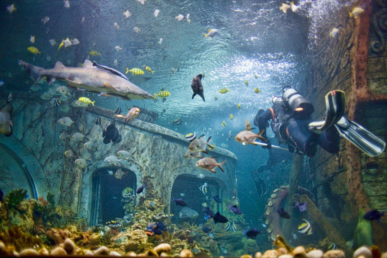 насыщенно-малиновые воронеж океанариум фото стал сотрудничать