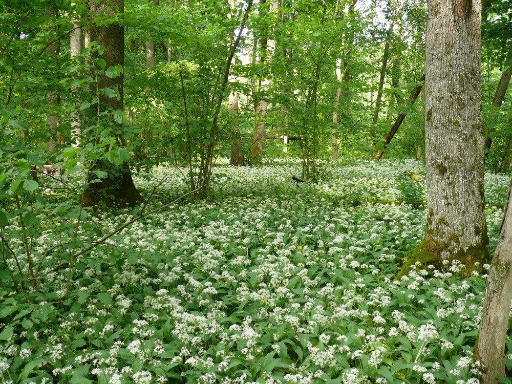 древней картинки с растениями брянской области нашем официальном