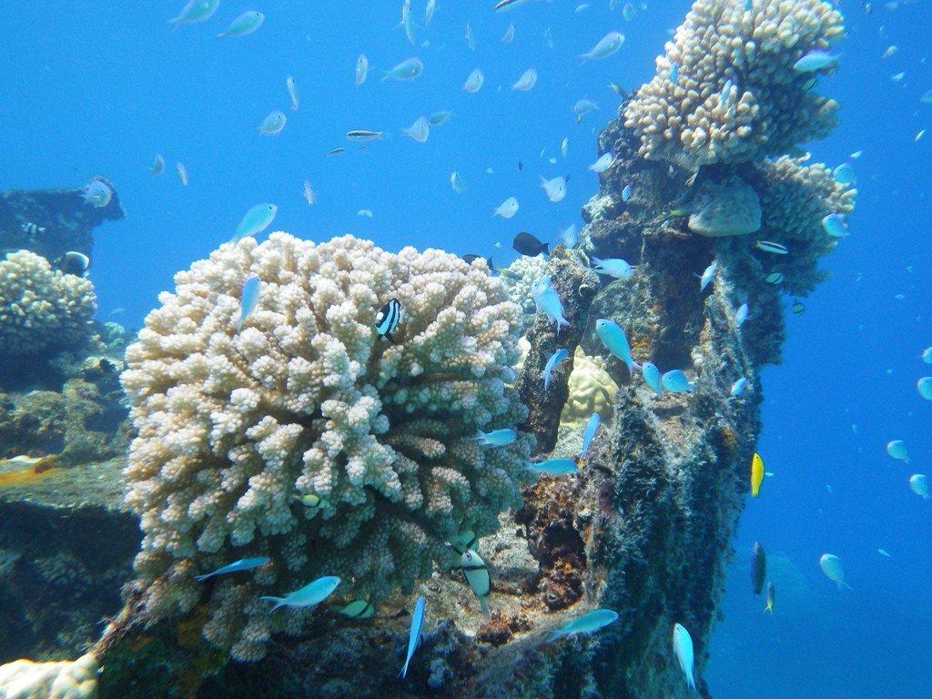 maloelap atoll