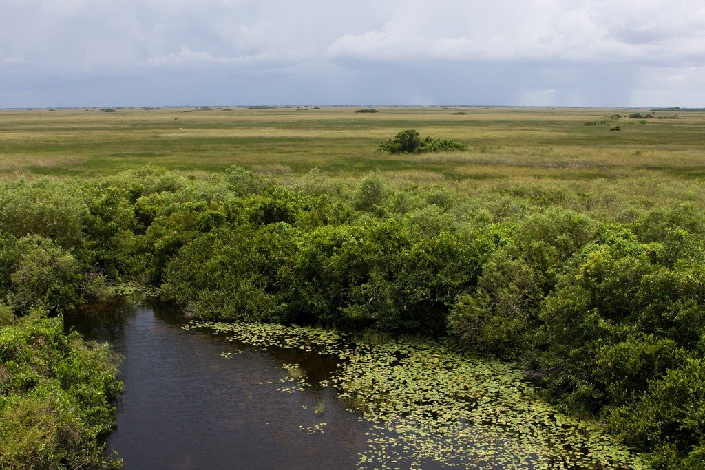 people of everglades essays Changes to the everglades affect far more than the eight million people and countless species of animals that call the system home.