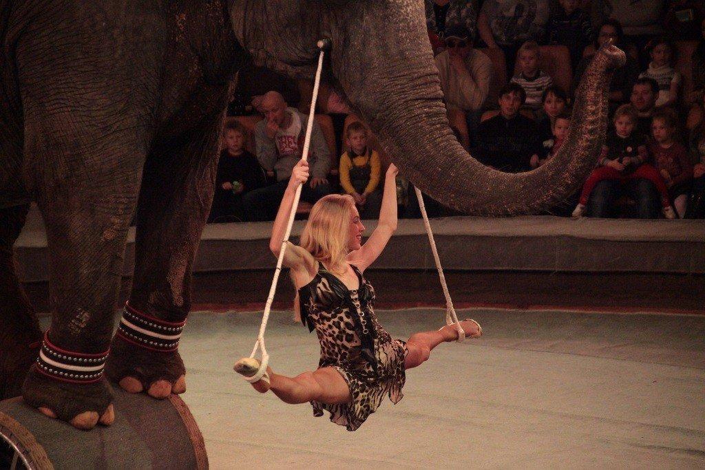 картинка цирк высокое качество приятны ощупь, комфортно
