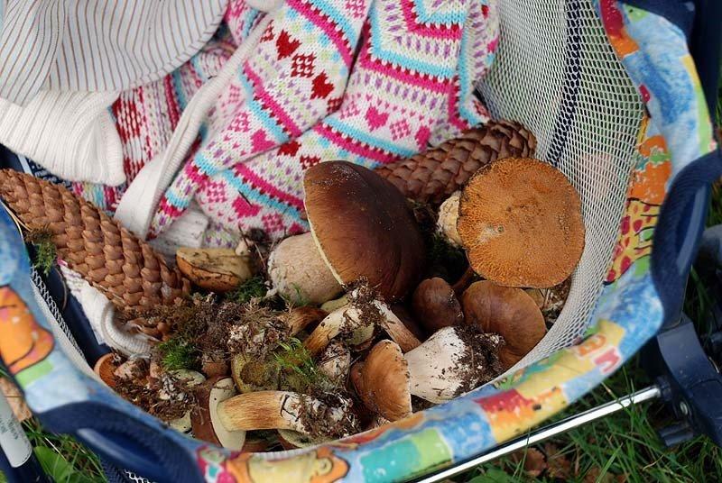 Съедобные грибы в украине фото и название дачном участке