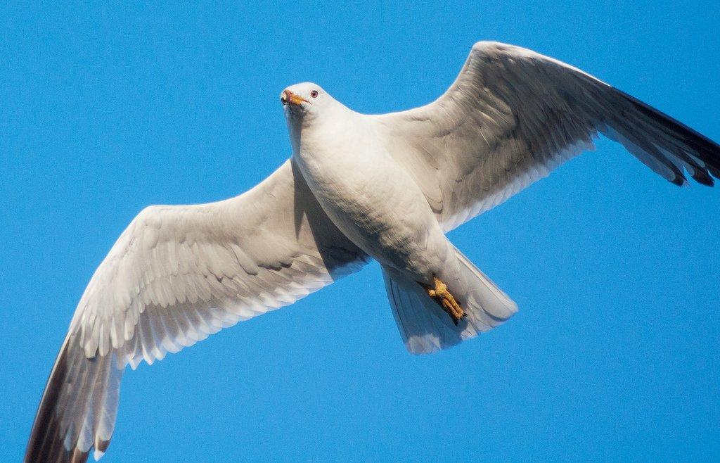 фото птицы нырок