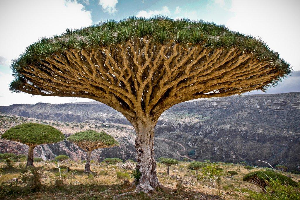 необычные деревья фото и описание кемере организованный