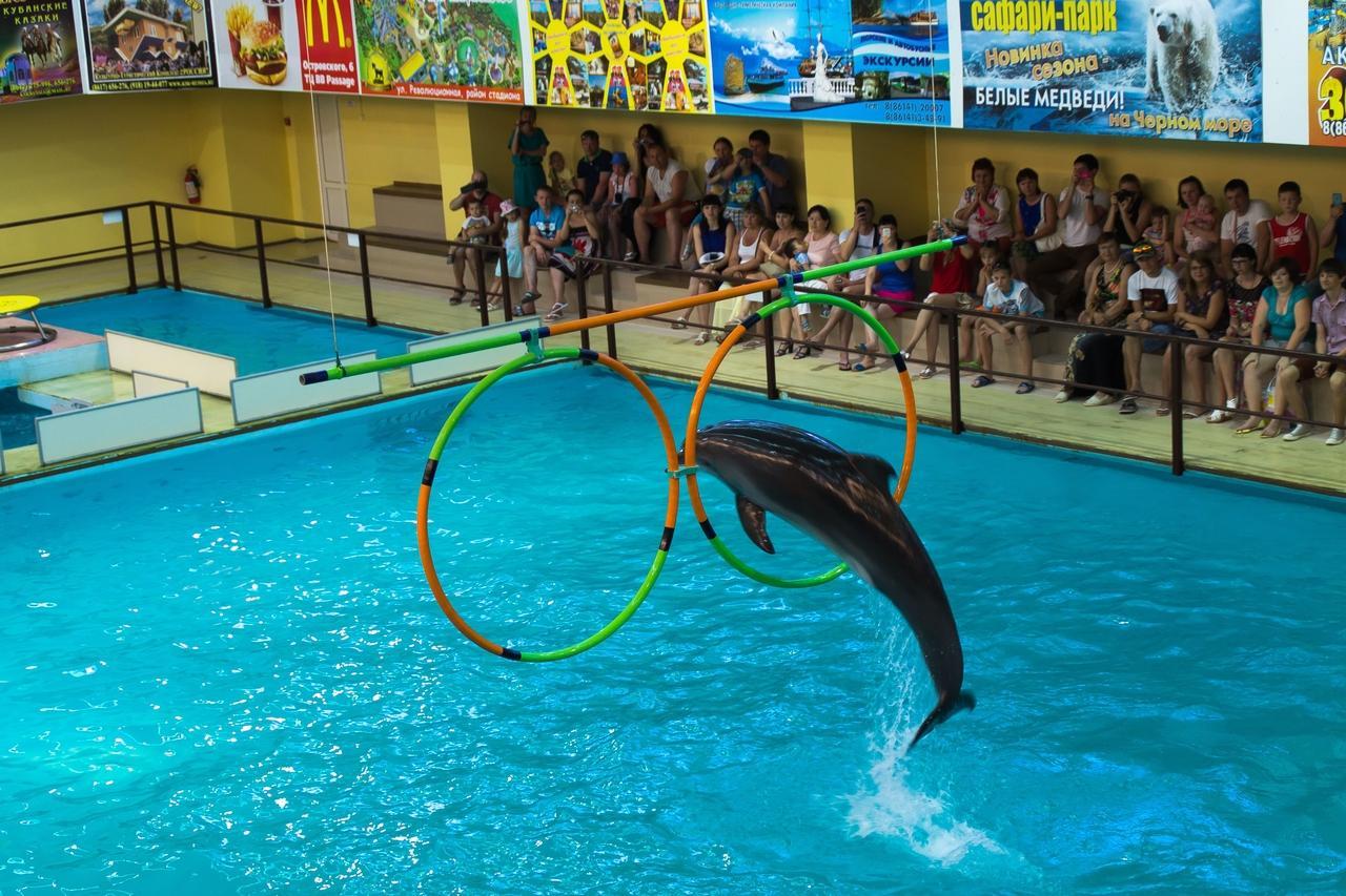 плетения геленджик дельфинарий сколько стоит фото момент щелчка, наш