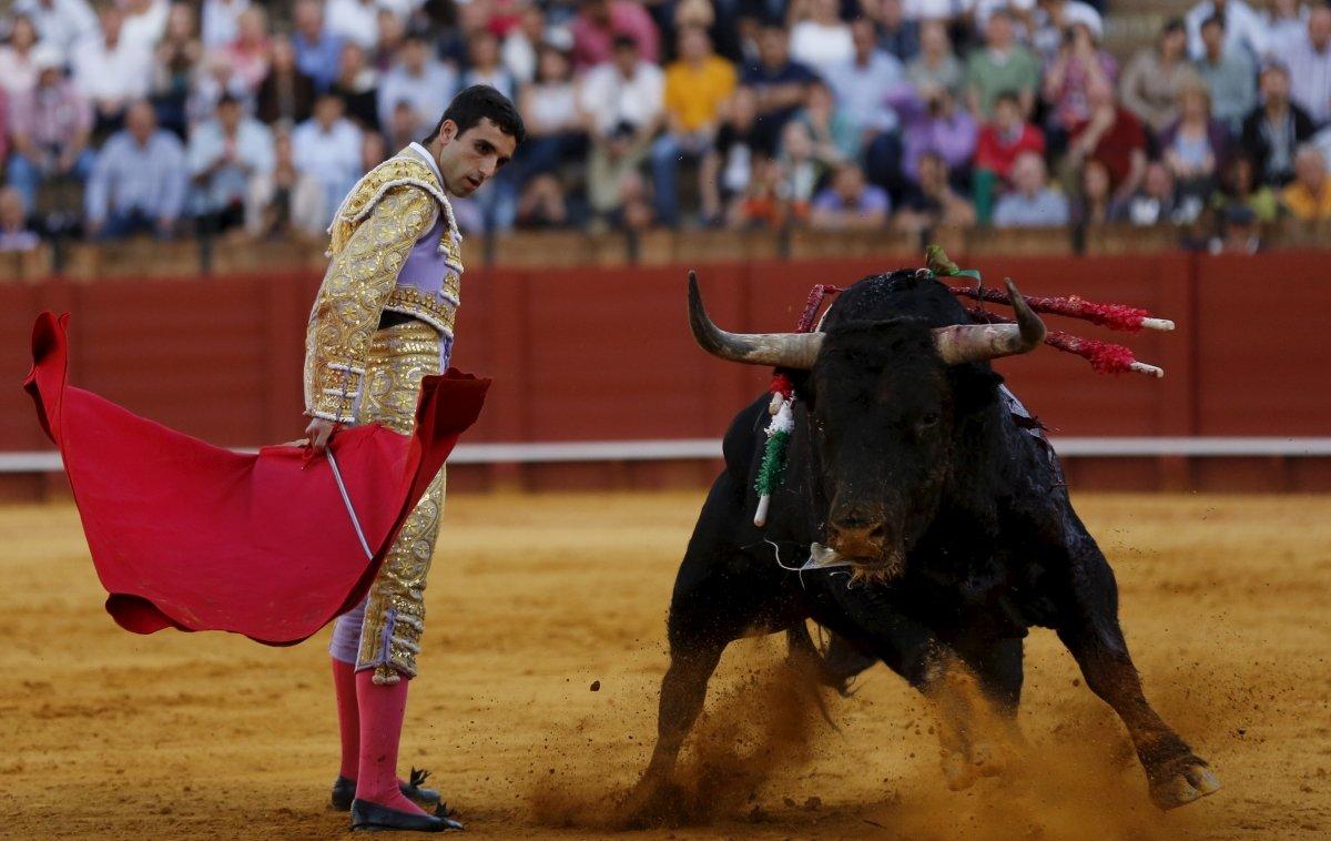 сам борьба с быком картинки овышение