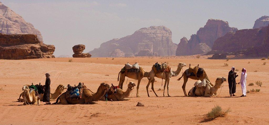 Верблюды в пустыне Вади-Рам Едем в Иорданию Едем в Иорданию 47 wadi rum camel