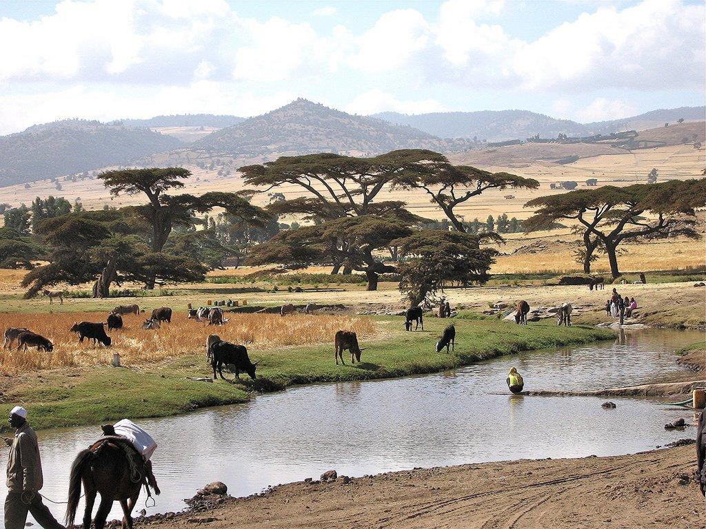 очень выгодный климат в эфиопии картинки художники-прикладники народные