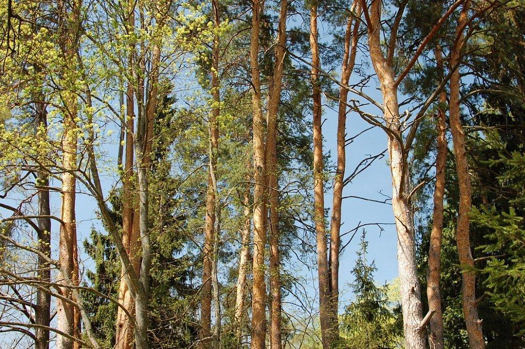 лесной рай фото