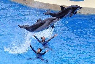 Шоу дельфинов в Ocean Park