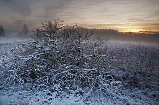 Природа Эстонии зимой