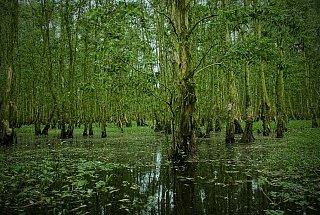 Заповедник Тра Су на юге Вьетнама