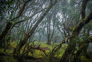 Деревья в национальном парке Гарахонай