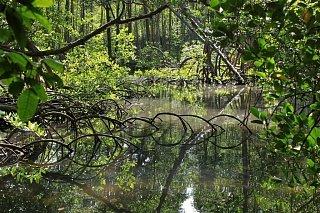 Мангровые болота в национальном парке Лос-Айтисес