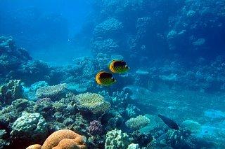 Подводный мир Красного моря Едем в Иорданию Едем в Иорданию 22 krasnoe more v akabe
