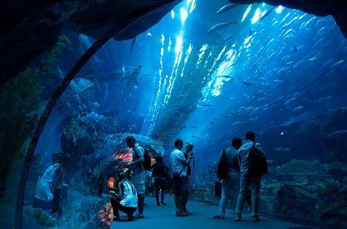 Огромный аквариум в «Дубай Молл»