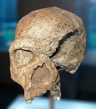 Штейнгеймский человек — окаменевший череп архаического гоминида. Череп обнаружен в 1933 году близ Штайнхайма-на-Муре (в 20 км к северу от Штутгарта, Германия). Его возраст оценивается от 250 до 350 тыс. лет