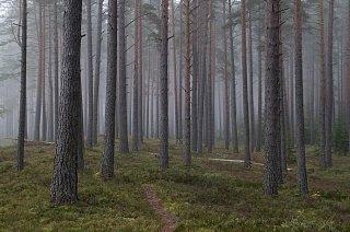 Эстонский лес