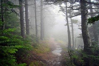 Лес на горе Парнита