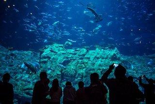 В океанариуме акулы проплывают прямо над головой